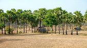 pic of shacks  - Rustic shack in the jungle of Myanmar  - JPG