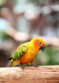 stock photo of parakeet  - parakeet or parrot on tree branch in the garden - JPG