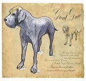 picture of gentle giant  - Great Dane  - JPG