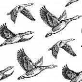 picture of geese flying  - flying geese - JPG