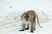 foto of phi phi  - Aggressive Monkey beach - JPG