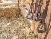 image of riding-crop  - riding horse equipment hang on wooden fence - JPG