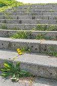 pic of weed  - Concrete stairs in the sunlight with a yellow flowering dandelion and various other types of weeds on the steps - JPG