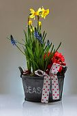 stock photo of begonias  - Spring floral basket - JPG