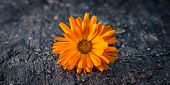 picture of rotten  - Beautiful orange flower on a decayed - JPG