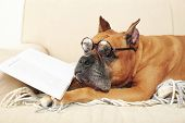stock photo of cute dog  - Cute dog in funny glasses and book lying on sofa - JPG