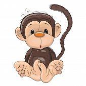 image of monkeys  - Cute Monkey isolated on a white background - JPG