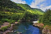 picture of coniferous forest  - Quick creek with cold and clean water - JPG