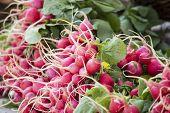 picture of farmers market vegetables  - Fresh organic vegetables  - JPG