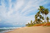 stock photo of mary  - Stella Maris beach in Salvador city - JPG