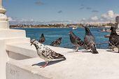picture of sevastopol  - flock of pigeons in the Sevastopol bay - JPG