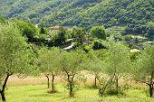 foto of apennines  - Italian countryside - JPG