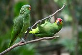 image of parrots  - parrot bird sitting on the perch - JPG