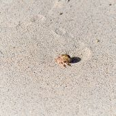 foto of hermit crab  - hermit crab in its shell crawling on the sand AoSane - JPG