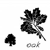 pic of acorn  - Set oak branches with leaves and acorns black contour on white background - JPG