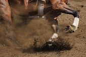 ������, ������: A close up action photo of a racing horse