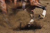 Постер, плакат: A close up action photo of a racing horse