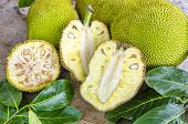 Постер, плакат: Cross section Ripe Fruit Of Giant Jack fruit