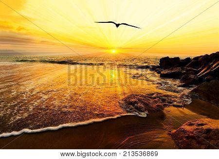 Sunset ocean bird