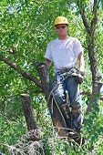 stock photo of arborist  - Man in a tree with all his safety gear and equipment cutting the branches - JPG