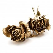 Two gold roses isolated on white background cutout. Golden dried flower heads, romance concept. poster