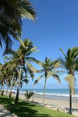 Vertical view of Mancora Beach in Peru with oalm trees and blue skies poster