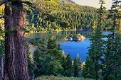 Pine Forest Surrounding Emerald Bay At Lake Tahoe, California, Usa poster