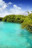 picture of cenote  - cenote mangrove clear turquoise water in Mayan Riviera Mexico - JPG
