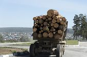 The Truck Transports The Cut Trees. Large Transport Loaded With Pine. Timber Transports Lumber. poster