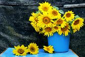 Still Life With Sunflowers. Bouquet Of Sunflowers In A Bucket. Vintage Rural Still Life With Flowers poster