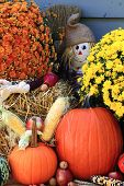stock photo of maize  - Vertical oriented Picture of Arrangement from Flowers Bale of Hay Pumpkin Squashes Apples Maize Scarecrow in front of Old Barn as decoration for Thanksgiving Day - JPG