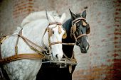 foto of carriage horse  - horses in a carriage with old castle wall on the background - JPG