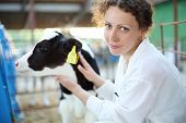 picture of calf cow  - Smiling woman in white robe with small calf looks at camera in big cow farm - JPG
