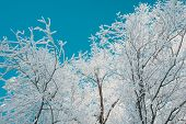Tree branches covered by frost and snow on sky background