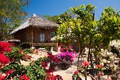 stock photo of jungle flowers  - Jungle hut and exotic flowers - JPG