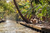 pic of stray dog  - A lovable stray dog walking on the side of a water canal in the thai countryside - JPG