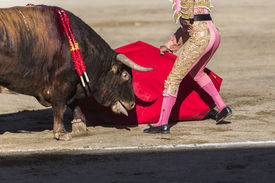 pic of bullfighting  - Bullfighter bullfighting with the crutch in the Bullring of Baeza Jaen province Andalusia Spain - JPG