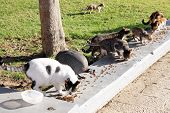 stock photo of fowl  - Feeding the homeless cats and guinea fowl in a public park - JPG