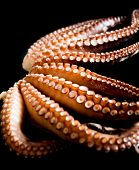 pic of octopus  - Boiled tentacles of octopus on dark table - JPG