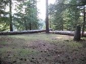 pic of redwood forest  - a small meadow in the redwood forest - JPG