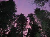 foto of redwood forest  - bright - JPG