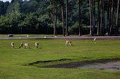 stock photo of wander  - Safari Park near Hamburg - JPG