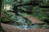 picture of hollow log  - River winds through the bottom of a moss covered gorge - JPG