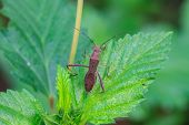 image of insect  - insect on plant - JPG