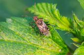 stock photo of insect  - insect on plant insect in nature background - JPG