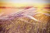 picture of grass area  - Beautiful nature  - JPG
