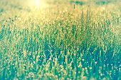 foto of morning  - Spring grass lit by the morning sun rays and covered with morning dew - JPG