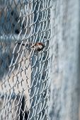 foto of chain link fence  - Chain - JPG