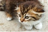 picture of snatch  - Cute little kitten frightened and ready to defend himself - JPG