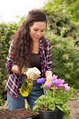 picture of pesticide  - a young woman spraying pesticide on her flowers - JPG